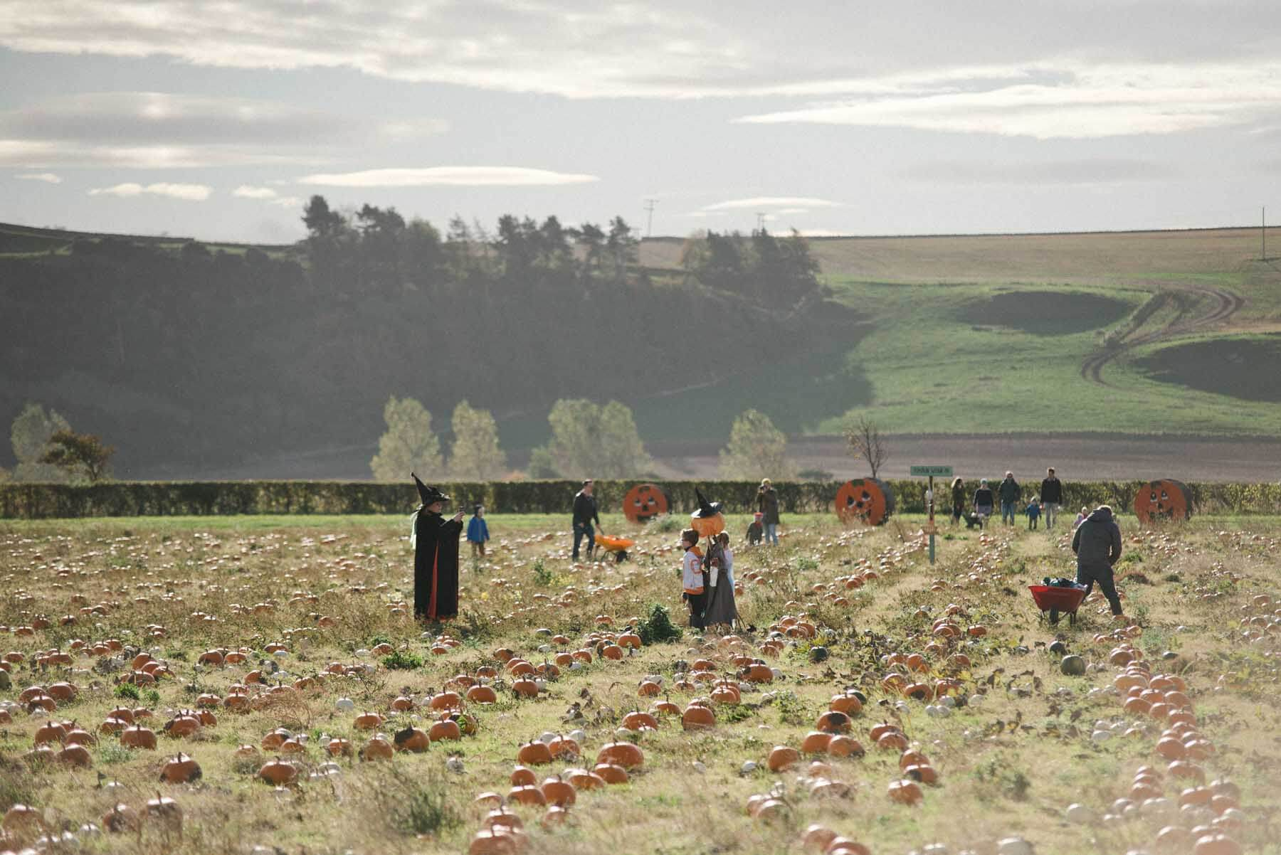 Pumpkin Patch East Lothian