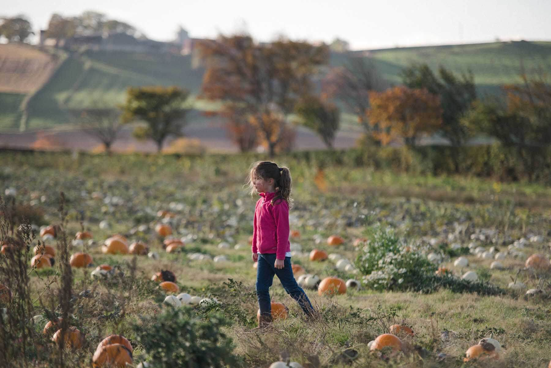 Child at the Kilduff Pumpkin Patch in East Lothian