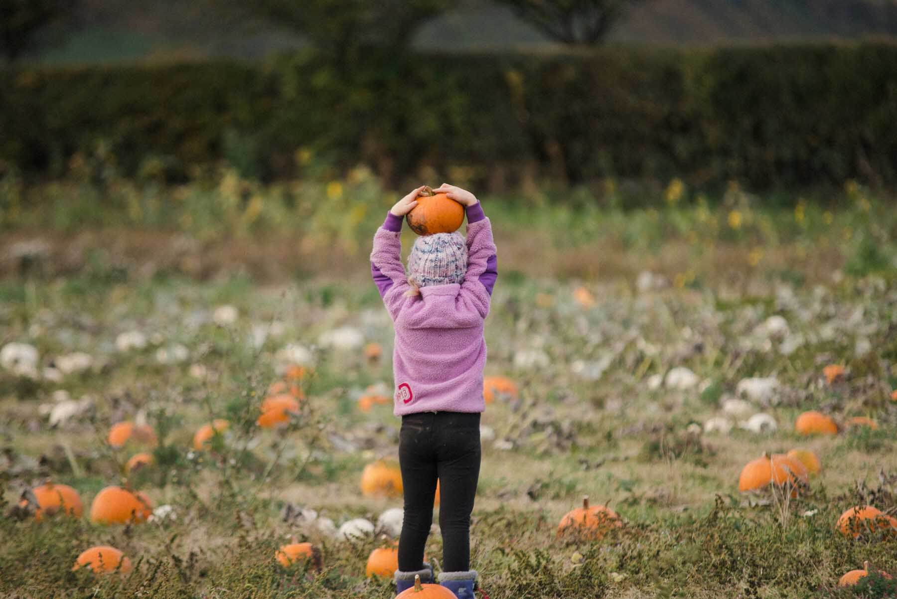 Child holding a Pumpkin above her head at the Kilduff Pumpkin Patch in East Lothian