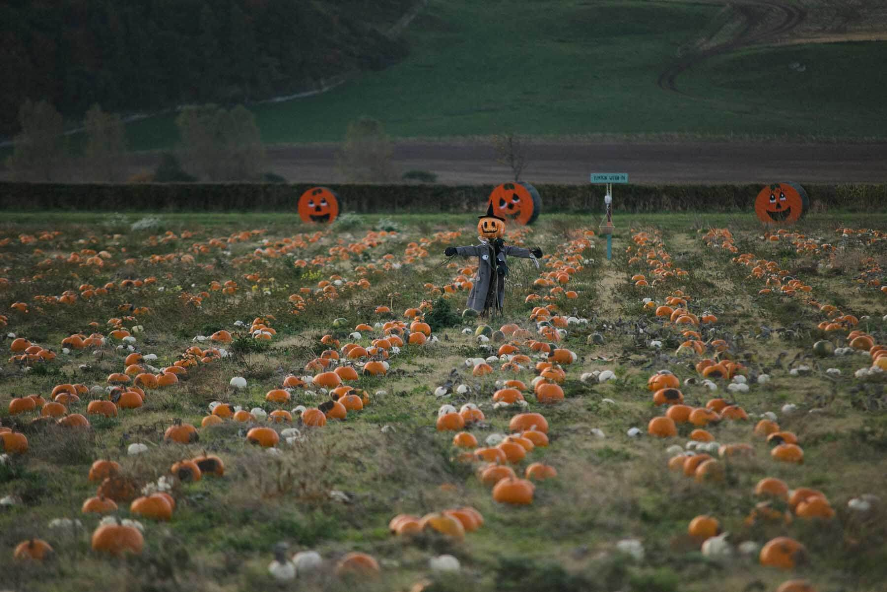 The Pumpkin Patch at Kilduff East Lothian
